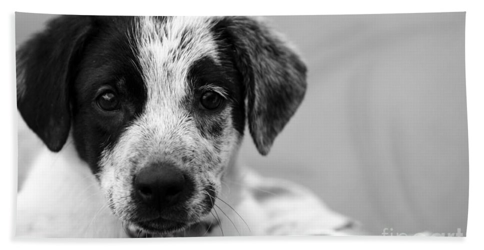 Dog Bath Towel featuring the photograph Keep Me by Amanda Barcon