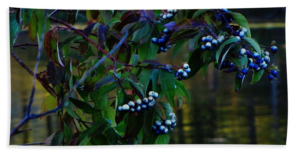 Berries Hand Towel featuring the photograph Kensington by September Stone