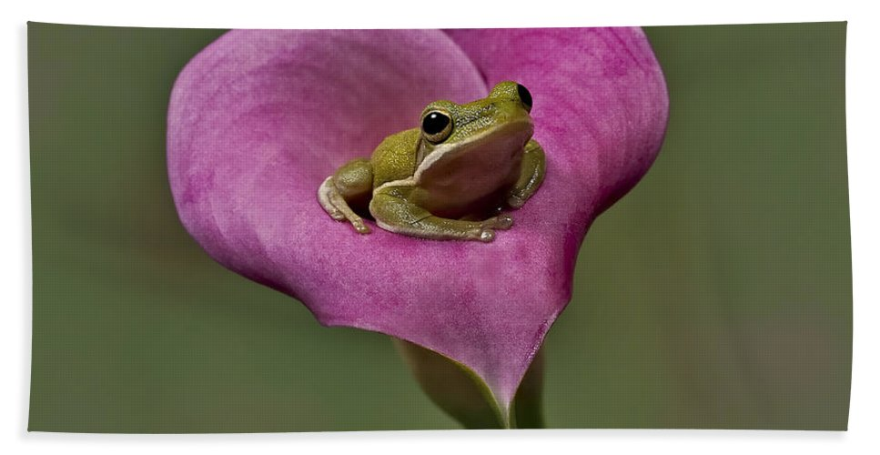 Calla Hand Towel featuring the photograph Kermit Hangs Out by Susan Candelario