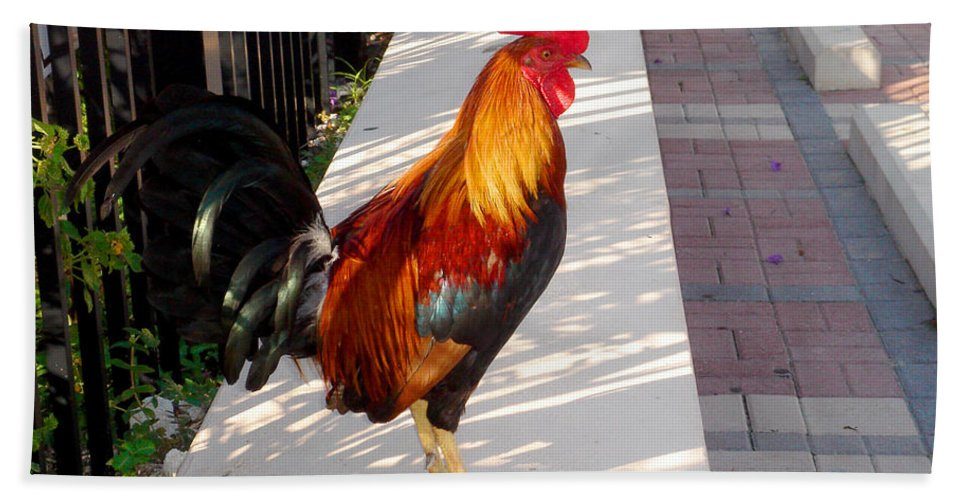 Photography Bath Sheet featuring the photograph Key West Rooster by Susanne Van Hulst