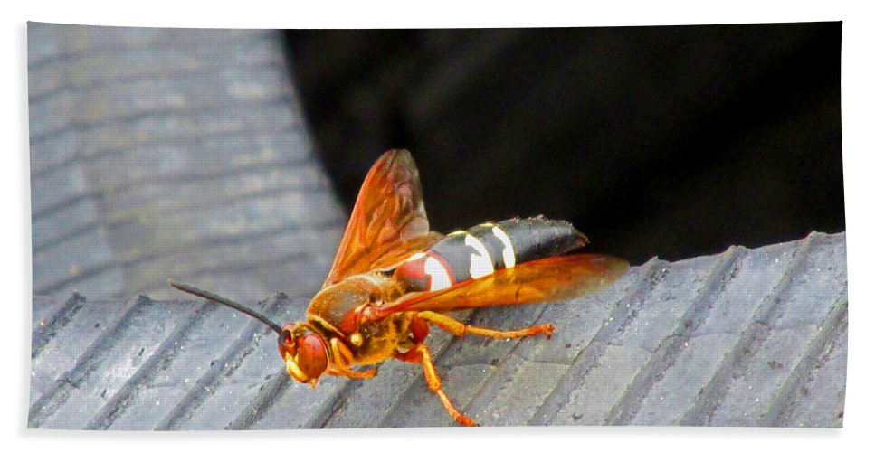 Cicada Killer Wasp Hand Towel featuring the photograph Killer 2 by Don Baker