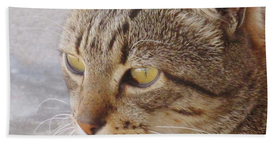Cat Bath Towel featuring the photograph King Cat by Ian MacDonald