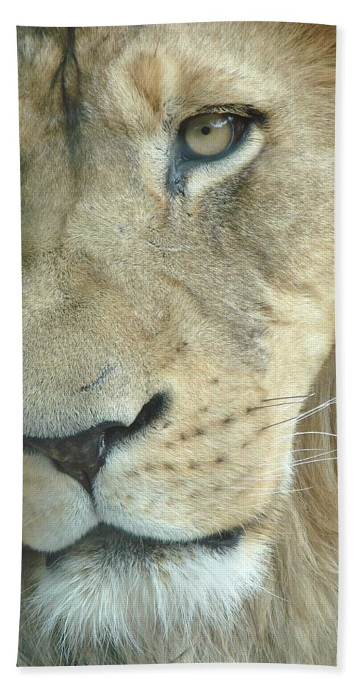 Lion Hand Towel featuring the photograph King by Margaret Bobb