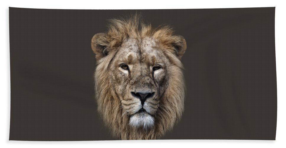 Panthera Leo Bath Sheet featuring the photograph King Of The Jungle by Rob Lester