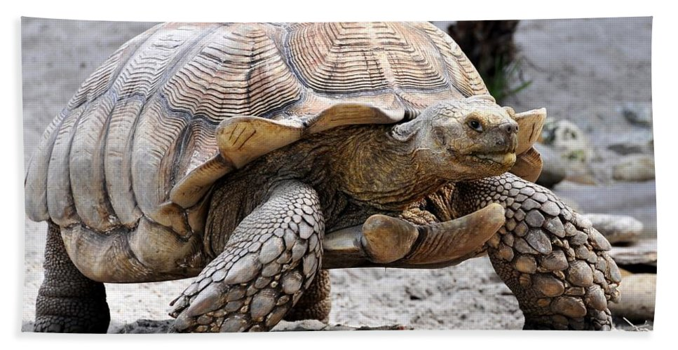 Galapagos Turtle Hand Towel featuring the photograph King Of The Galapagos by David Lee Thompson