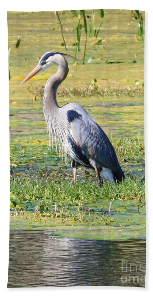 Great Blue Heron Hand Towel featuring the photograph King Of The Marsh by Carol Groenen
