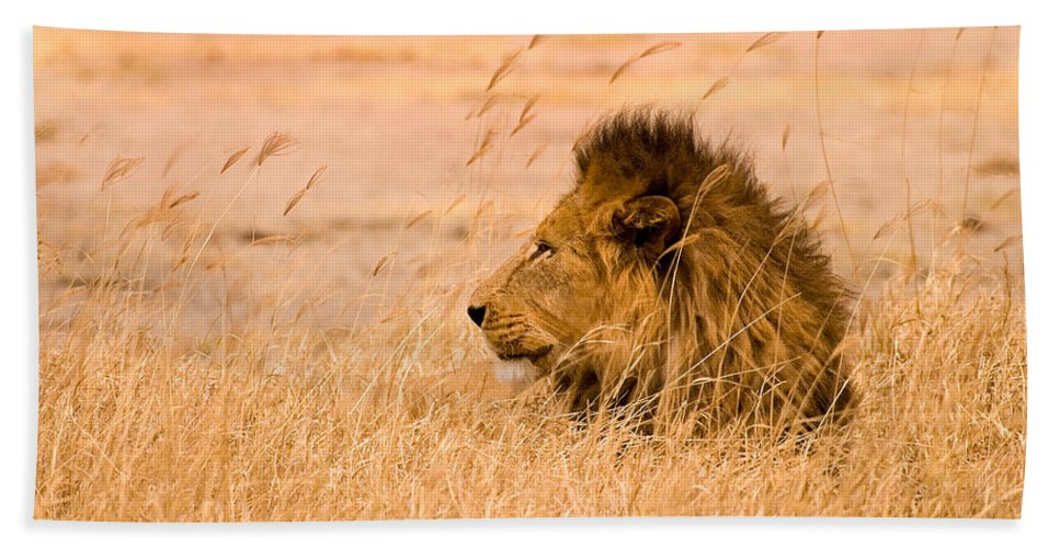 3scape Bath Sheet featuring the photograph King of The Pride by Adam Romanowicz