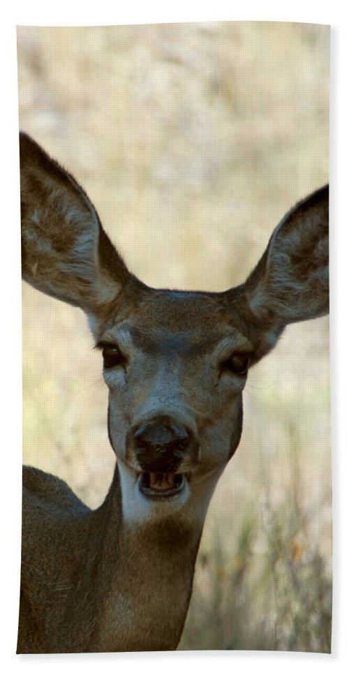 Deer Hand Towel featuring the photograph Kiss Me by Donna Blackhall