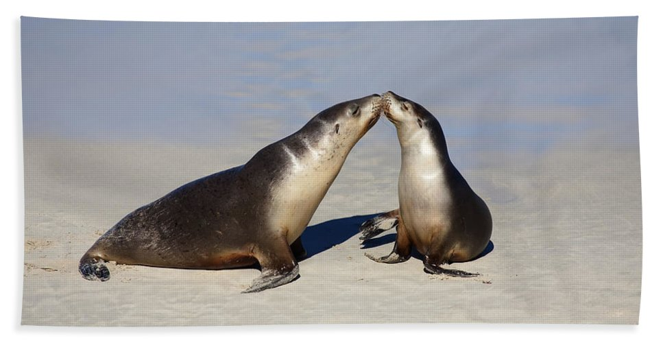 Sea Lion Hand Towel featuring the photograph Kiss by Mike Dawson