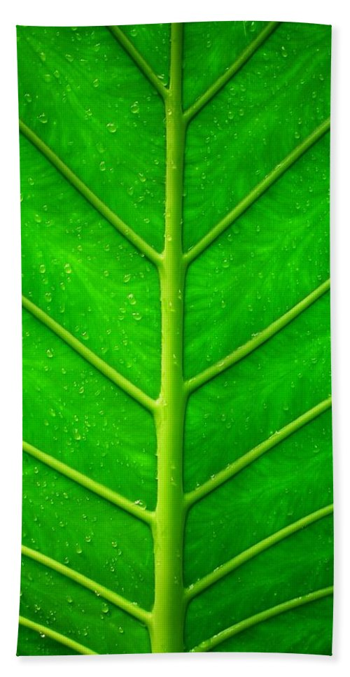 Plant Hand Towel featuring the photograph Kiss The Rain ... by Juergen Weiss