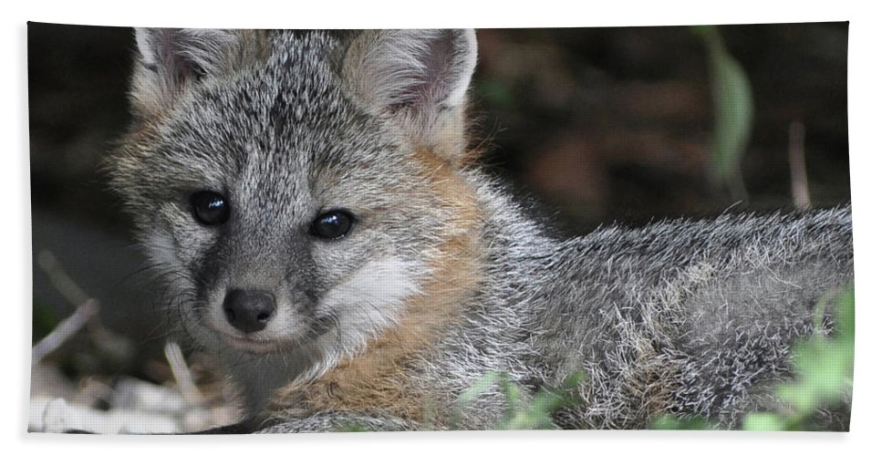 Kit Fox Hand Towel featuring the photograph Kit Fox1 by Torie Tiffany