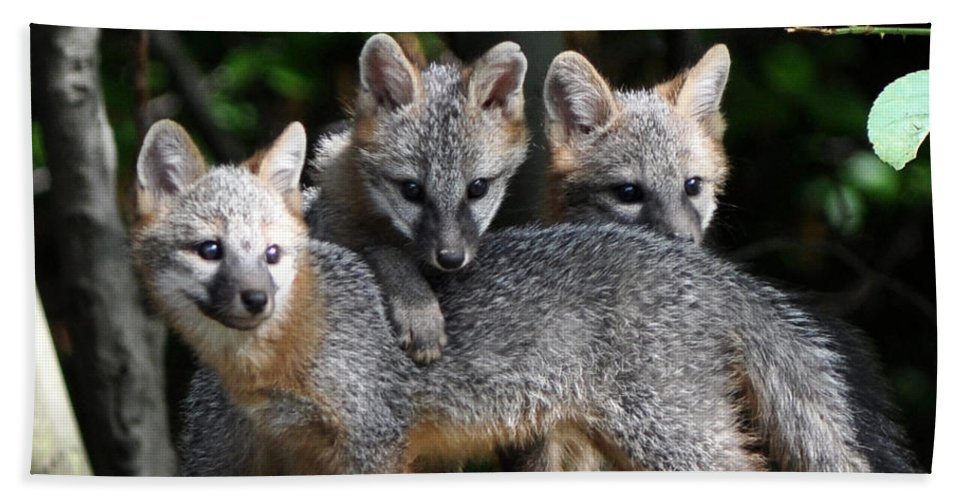Kit Fox Hand Towel featuring the photograph Kit Fox10 by Torie Tiffany