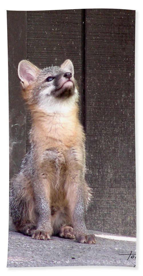 Kit Fox Hand Towel featuring the photograph Kit Fox11 by Torie Tiffany