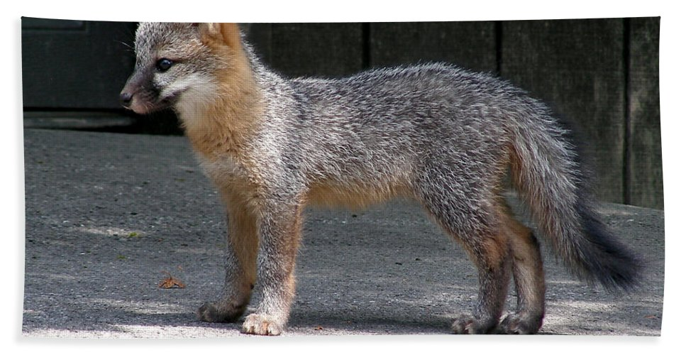 Kit Fox Hand Towel featuring the photograph Kit Fox14 by Torie Tiffany