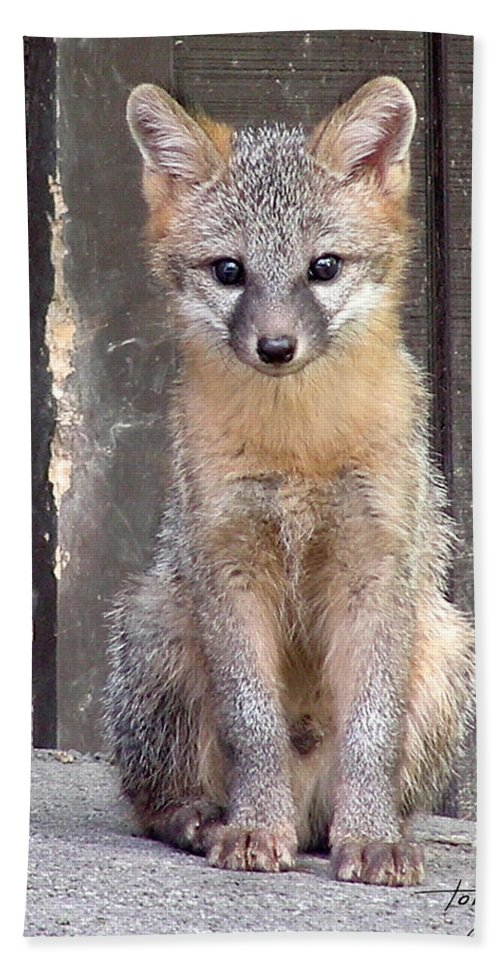 Kit Fox Hand Towel featuring the photograph Kit Fox15 by Torie Tiffany