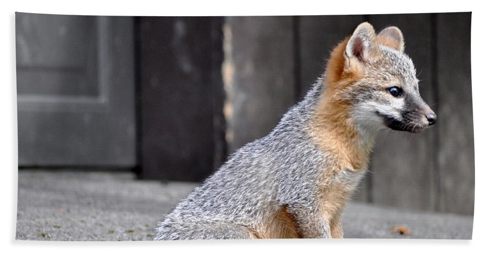Kit Fox Hand Towel featuring the photograph Kit Fox2 by Torie Tiffany