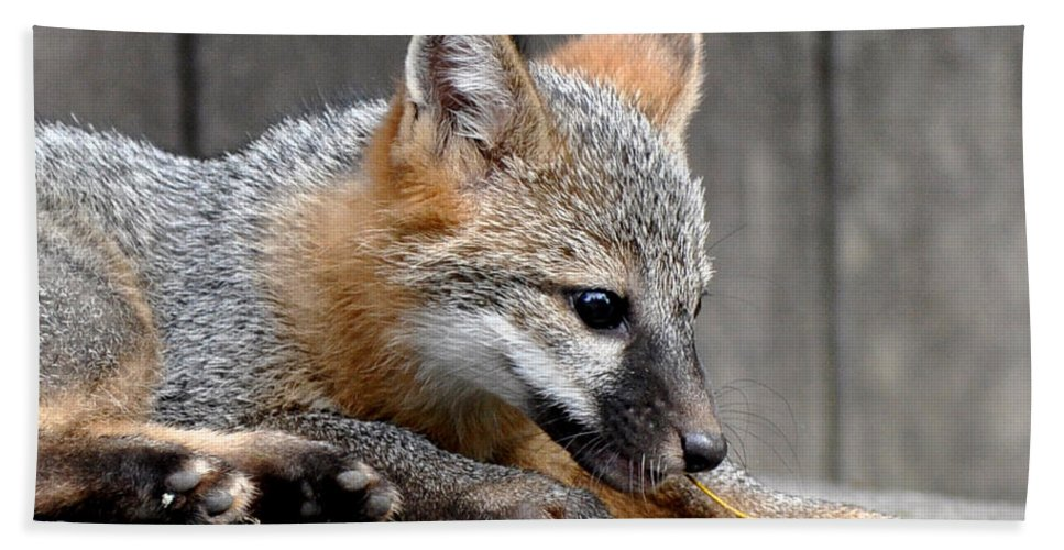 Kit Fox Bath Sheet featuring the photograph Kit Fox3 by Torie Tiffany