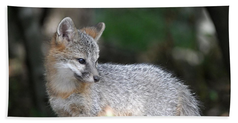 Kit Fox Hand Towel featuring the photograph Kit Fox7 by Torie Tiffany