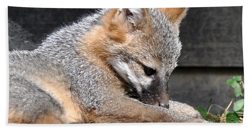 Kit Fox Hand Towel featuring the photograph Kit Fox8 by Torie Tiffany