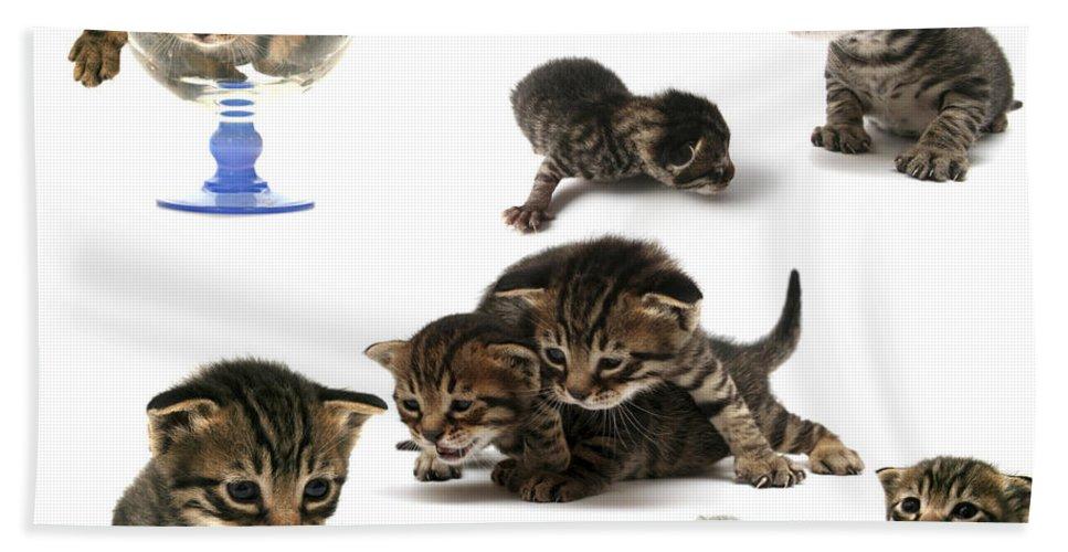 Cat Cats Hand Towel featuring the photograph Kitten Collage by Yedidya yos mizrachi