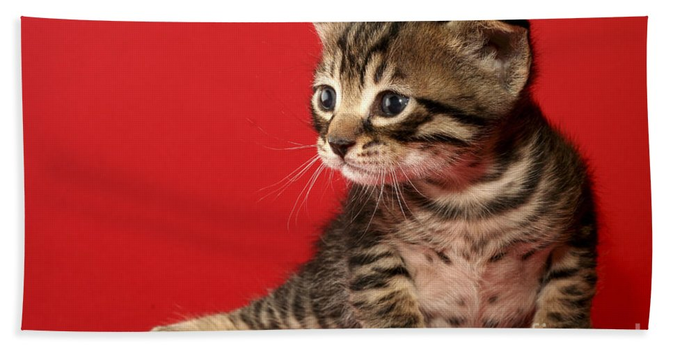Cat Bath Towel featuring the photograph Kitten On Red by Yedidya yos mizrachi