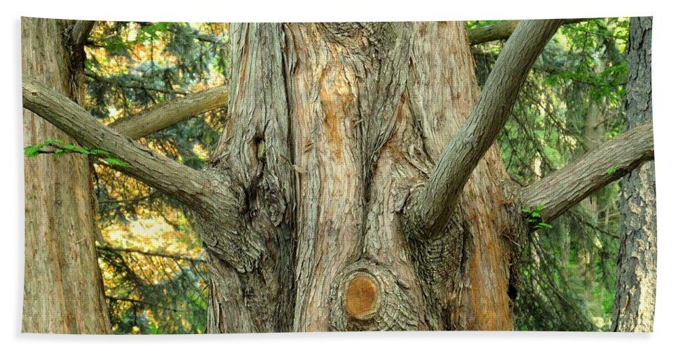 Tree Hand Towel featuring the photograph Knarled by Ian MacDonald
