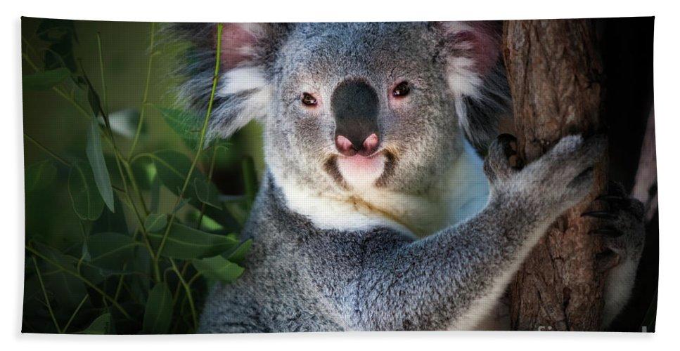 Koala Bear Bath Sheet featuring the photograph Koala by Doug Sturgess