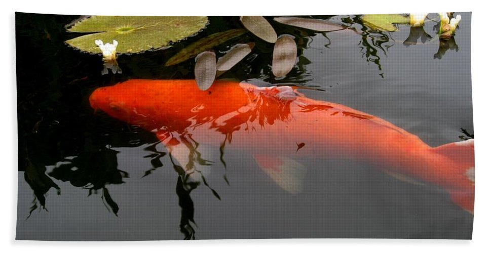 Koi Hand Towel featuring the photograph Koi Fish 4 by Marta Robin Gaughen