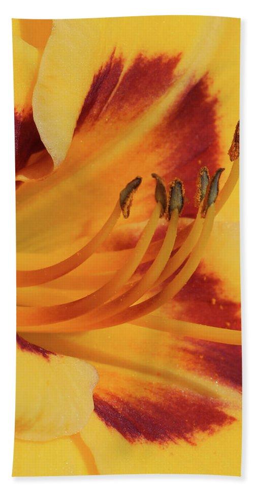 Daylily Bath Sheet featuring the photograph Kokomo Sunset 05 - Daylily by Pamela Critchlow