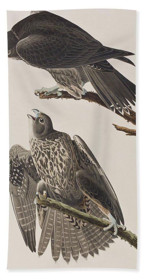 Labrador Falcon Hand Towel featuring the painting Labrador Falcon by John James Audubon