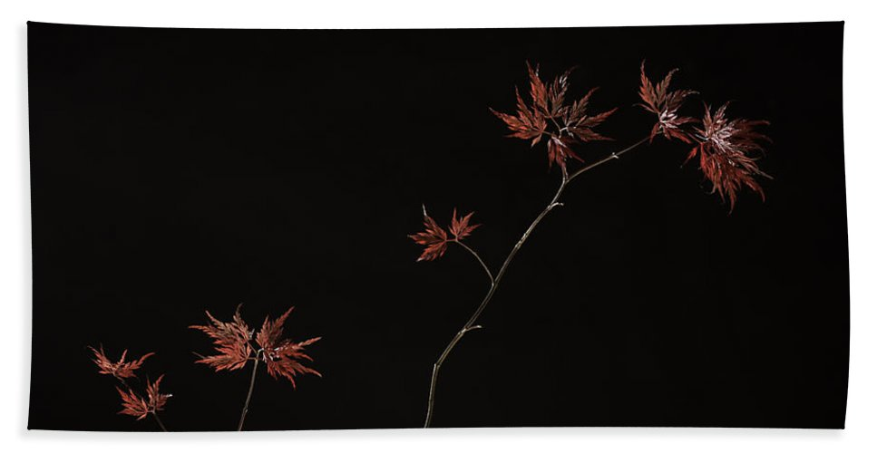 Japanese Hand Towel featuring the photograph Lace Leaf Maple by Herman Robert