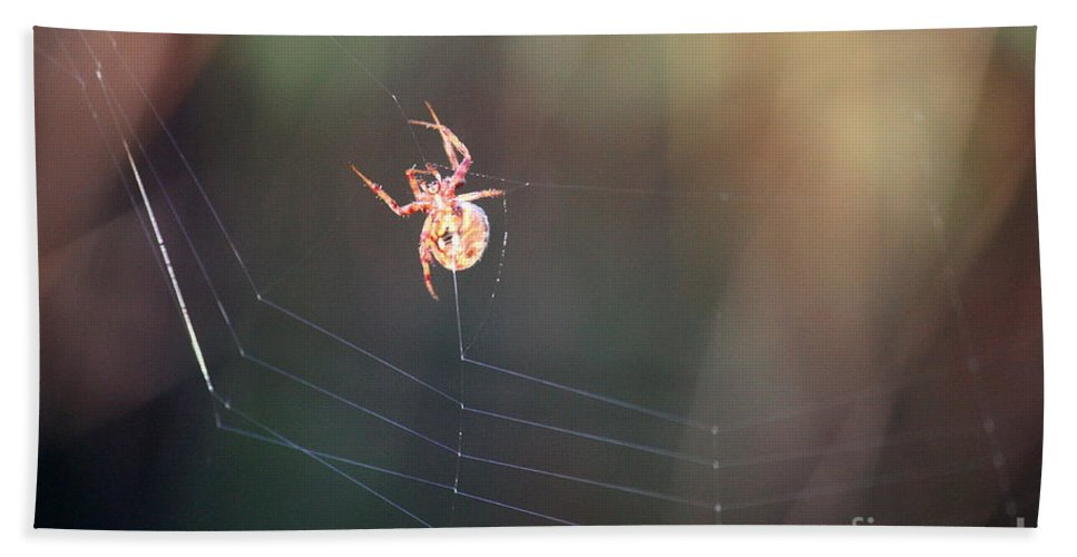 Spider Hand Towel featuring the photograph Lady In The Marsh by Carol Groenen