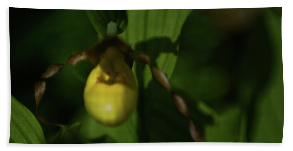 lady Slipper Bath Sheet featuring the photograph Lady Slipper by Paul Mangold