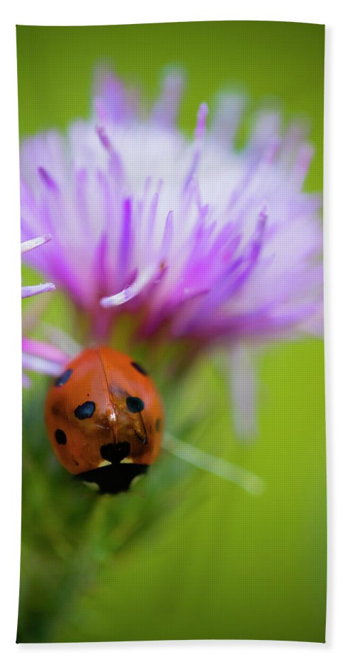 Ladybug Bath Sheet featuring the photograph Ladybird by Ignacio Leal Orozco