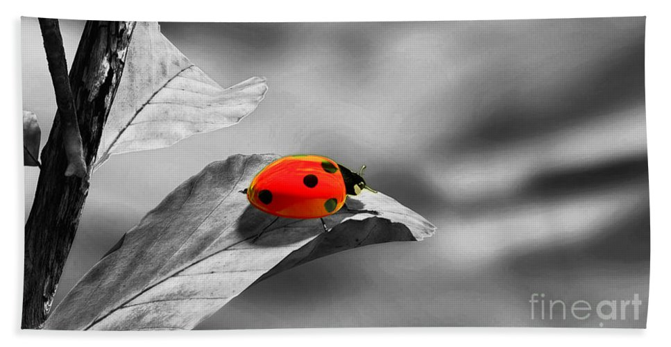 Ladybird Hand Towel featuring the photograph Ladybird by Sebastien Coell