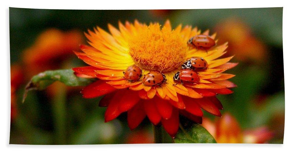 Flower Hand Towel featuring the photograph Ladybug Gathering by Carol Milisen