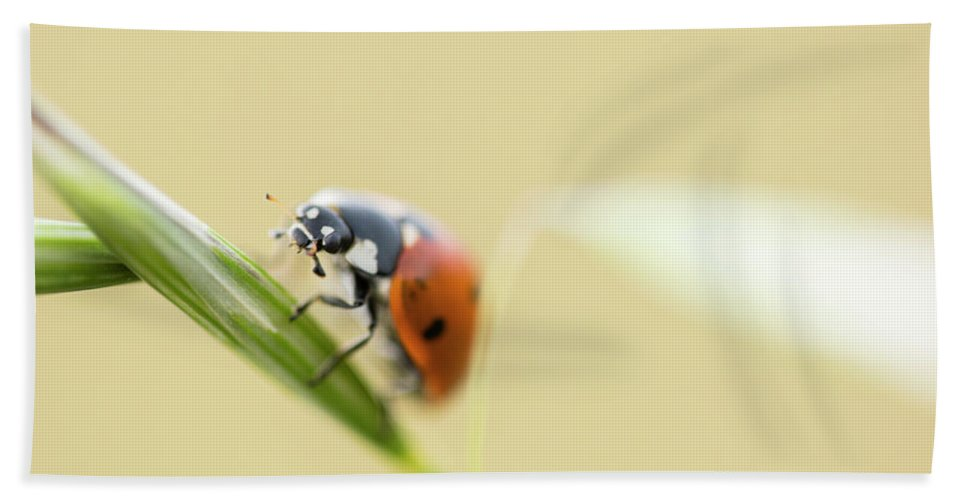Ladybird Bath Sheet featuring the photograph Ladybug by Ignacio Leal Orozco