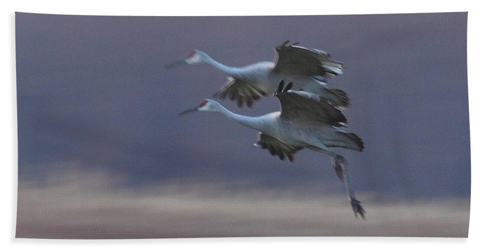 Sandhill Cranes Birds Photography Photograph Wildlife Flying Flight Hand Towel featuring the photograph Landing Gear Down by Shari Jardina