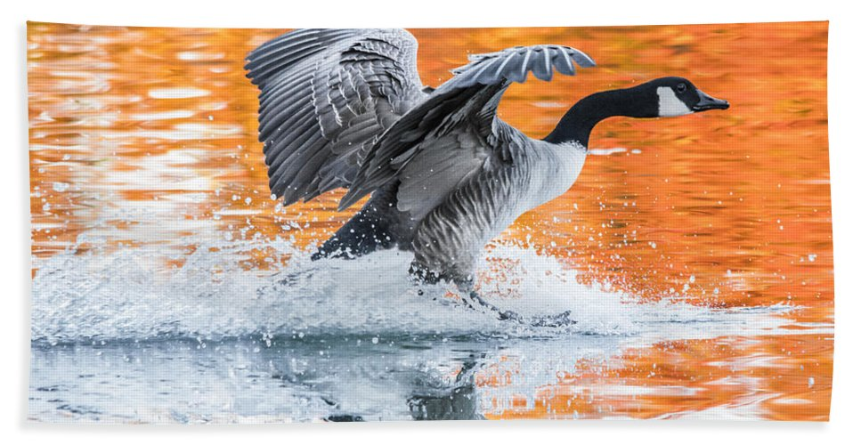 Canadian Goose Hand Towel featuring the photograph Landing by Parker Cunningham