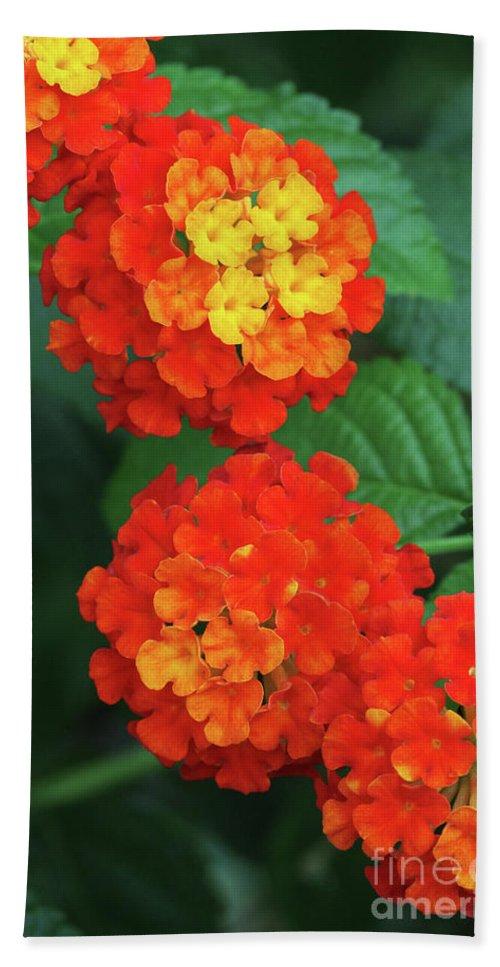 Flower Bath Sheet featuring the photograph Lantana Bandana Red Flower by Judy Whitton