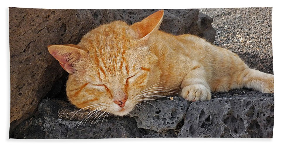 Cat Hand Towel featuring the photograph Lanzarote Ginger by Charles Stuart
