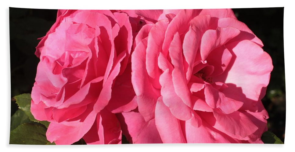 Large Pink Roses Bath Sheet featuring the photograph Large Pink Roses by Carol Groenen