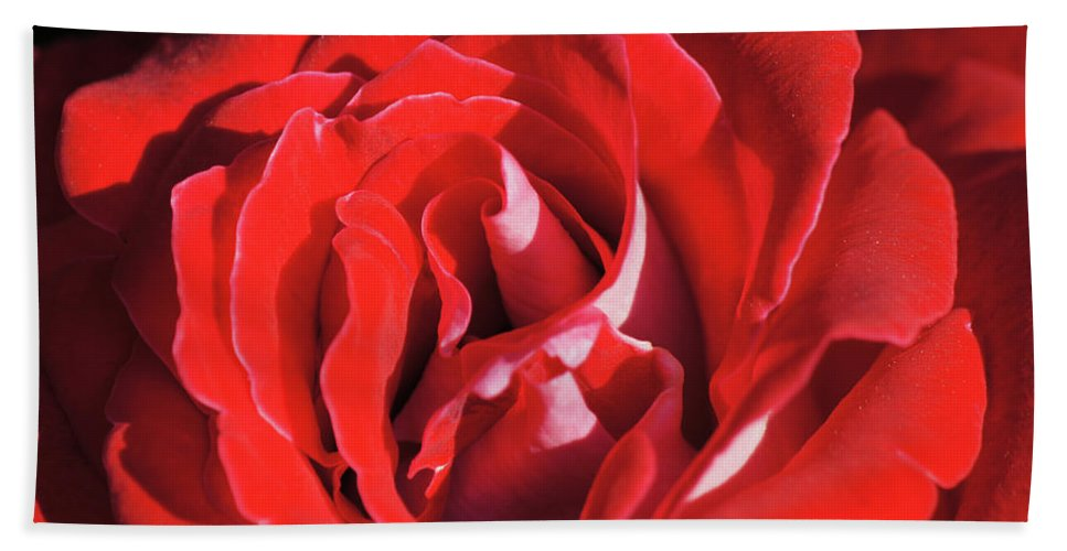 Center Bath Sheet featuring the photograph Large Red Rose Center - 003 by Shirley Heyn