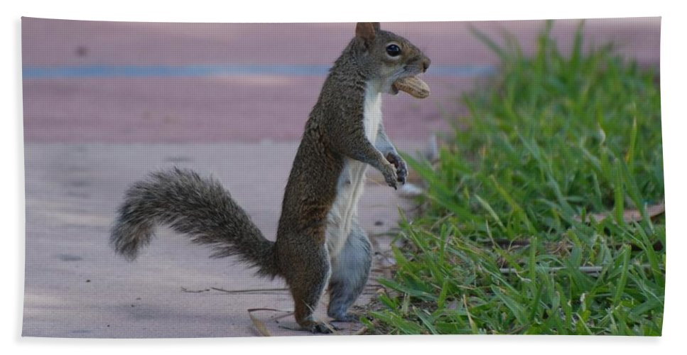 Squirrels Hand Towel featuring the photograph Last Squirrel Standing by Rob Hans