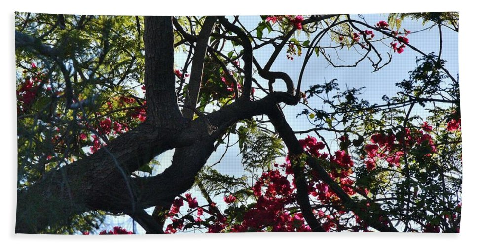 Linda Brody Hand Towel featuring the photograph Late Afternoon Tree Silhouette With Bougainvilleas I by Linda Brody