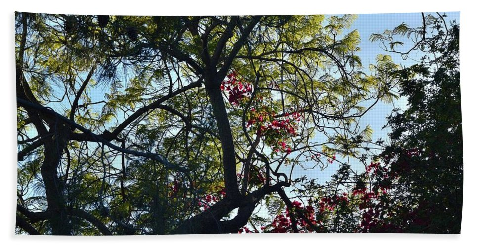 Linda Brody Hand Towel featuring the photograph Late Afternoon Tree Silhouette With Bougainvileas II by Linda Brody