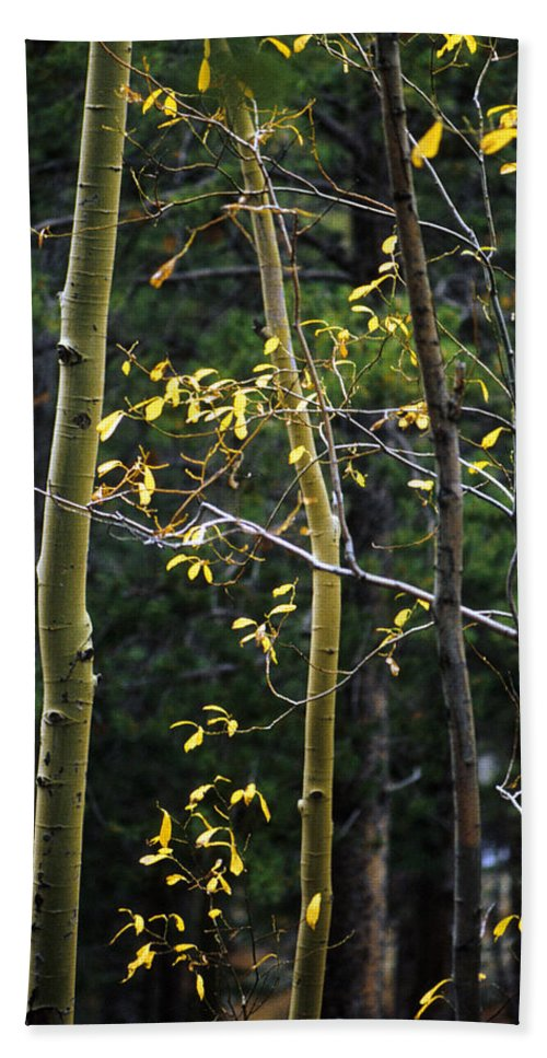 Aspen Hand Towel featuring the photograph Late Aspen by Jerry McElroy