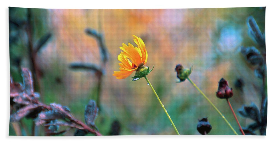 Flowers Bath Sheet featuring the photograph Late Summer Rain From The Forest Floor by Bob Orsillo