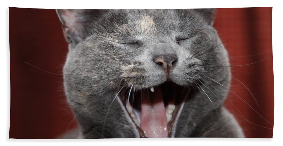Kitty Hand Towel featuring the photograph Laughing Kitty by Amanda Barcon