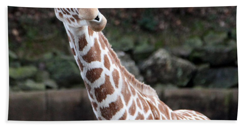 Laughing Giraffe Bath Towel featuring the photograph Laughter by Amanda Barcon